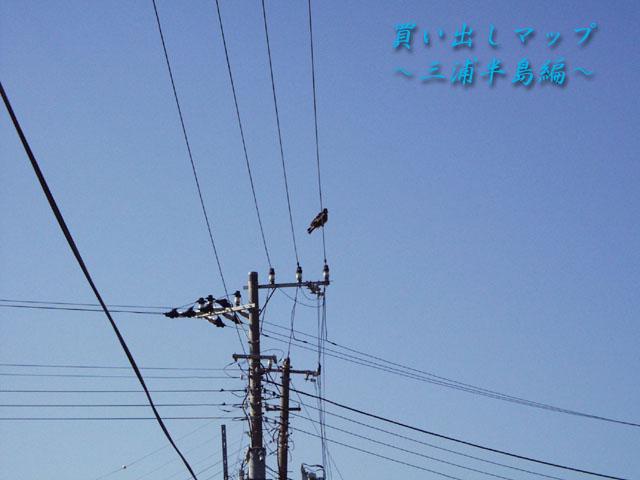 M_MIURA.JPG